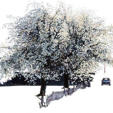 Alte Kirschbaumblüte - Öl auf Leinwand