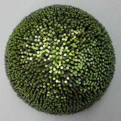 Hellgrüner Seeigel